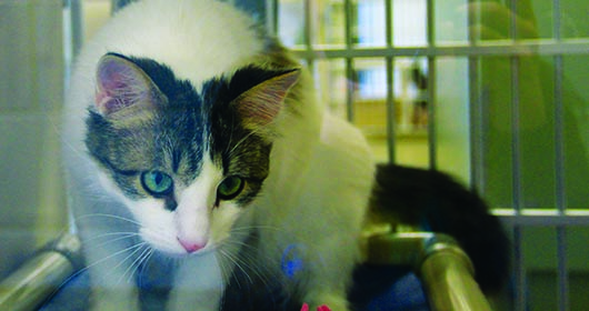 Local shelter provides furry friend fix